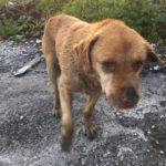 Macabra scoperta ad Eboli, cane trovato impiccato